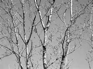 treebranches_08162013